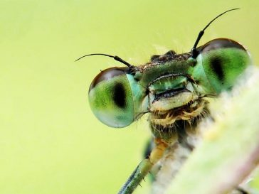 Insect Extinction Will Lead to Collapse of Nature's Ecosystem